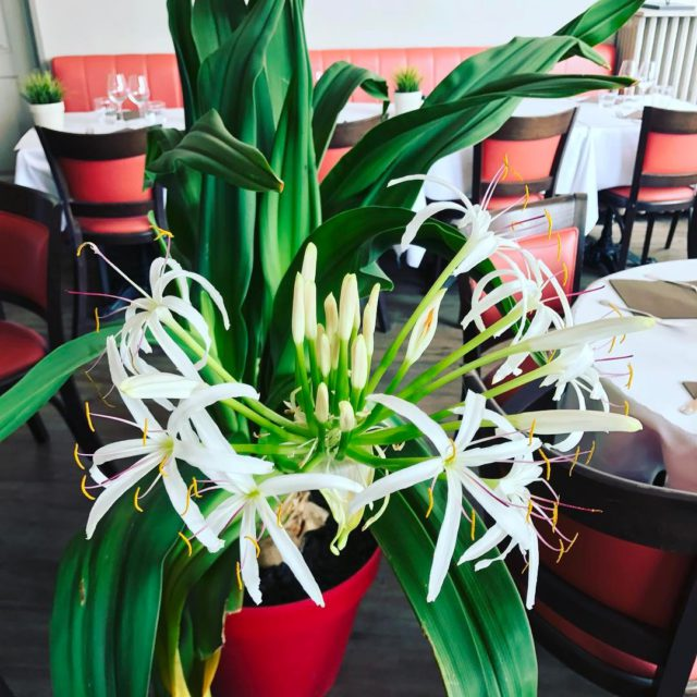 trouville restaurant deco plantes flower beautiful nice natural